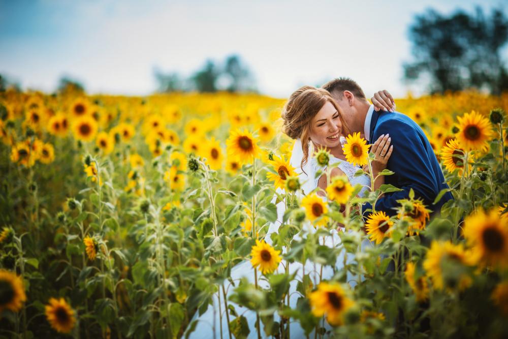 dekoracje ślubne ze słoneczników - zdjęcie 1