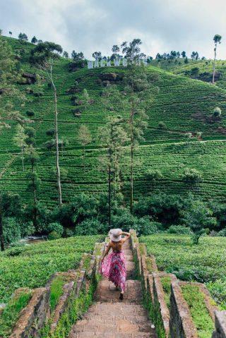 Egzotyczna podróż poślubna - Sri Lanka - zdjęcie 3