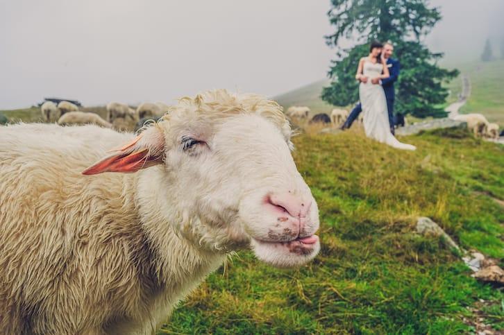 zdjęcia ślubne piotr zwarycz obiektiv fotografia