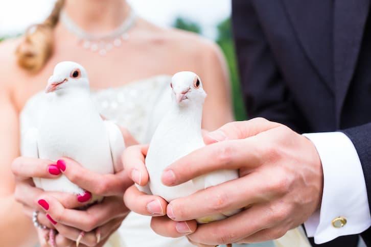 młoda para białe gołębie