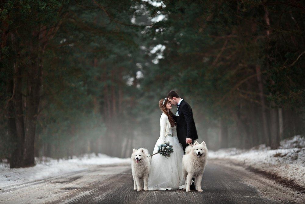 Trendy ślubne 2020: wesele ze zwierzętami