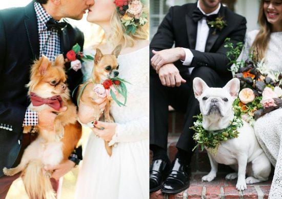 Sesja ślubna ze zwierzętami - zdjęcie 1