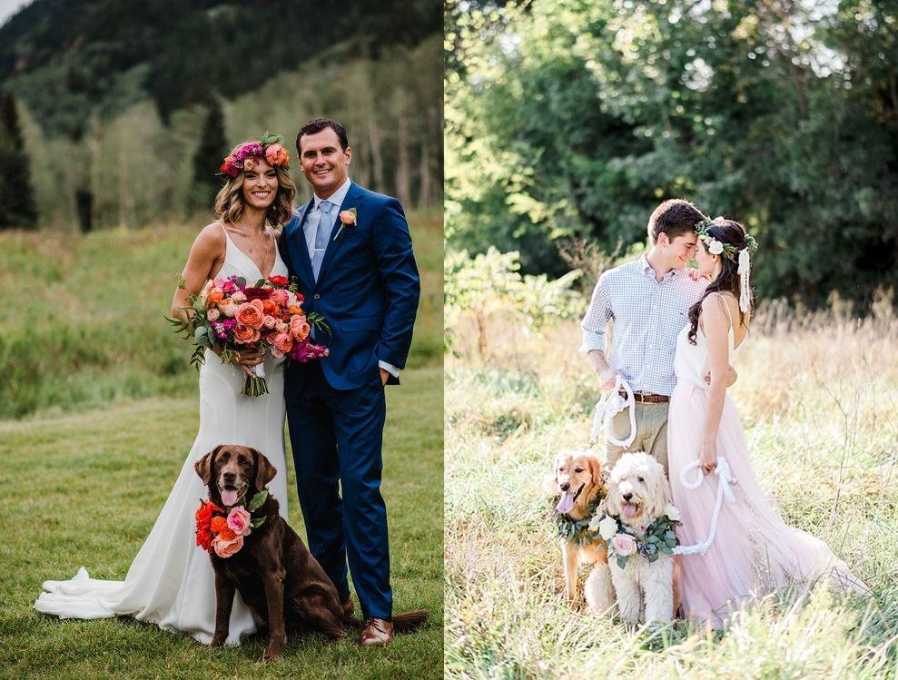 Sesja ślubna ze zwierzętami - zdjęcie 2