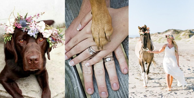 Sesja ślubna ze zwierzętami - zdjęcie 3