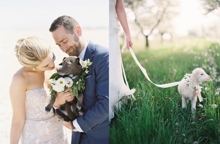 Sesja ślubna ze zwierzętami - zdjęcie 5