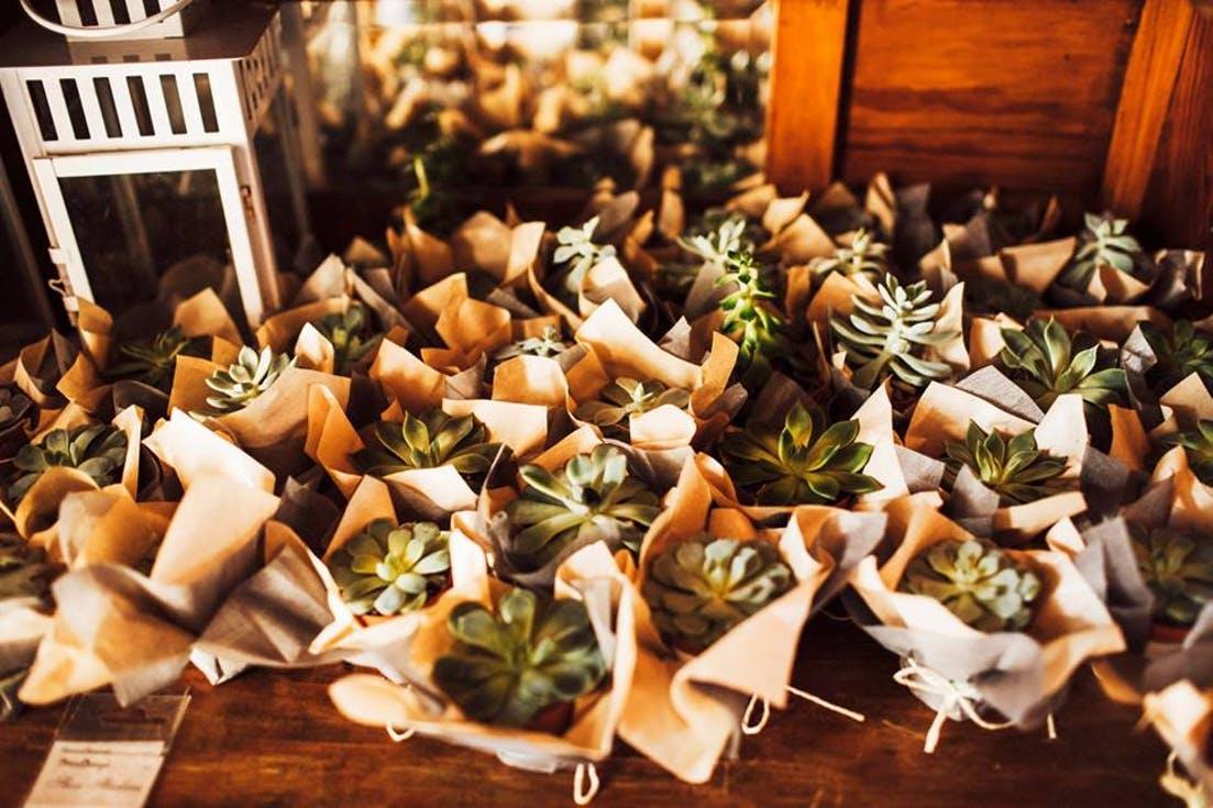roślinki dla gości weselnych